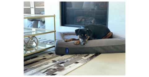 Broad World's dog Ralf on his Casper bed, available on Amazon